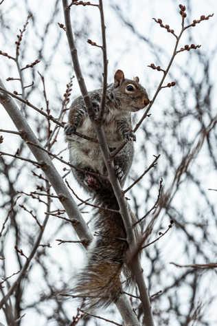 Écureuil à travers la fenêtre