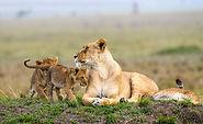 masai_mara_kenya_safari.jpg