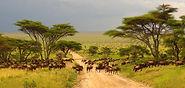 Kruger_National_Park.jpg
