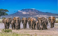 Amboseli_National_Park.jpg