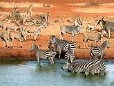Tsavo_National_Park2.jpg