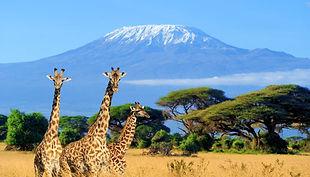 Kenya_National_park_Kilimanjaro.jpg