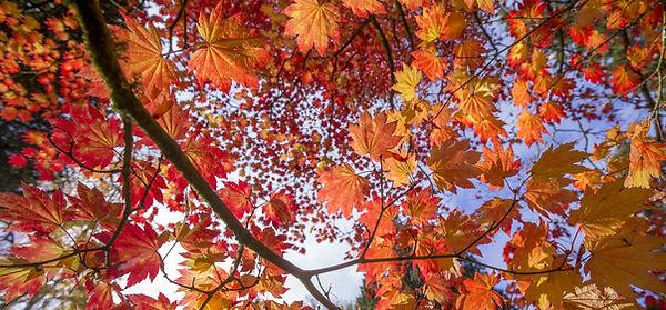 autumn westonbirt.jpg