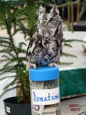 screech-owl-donation.jpg