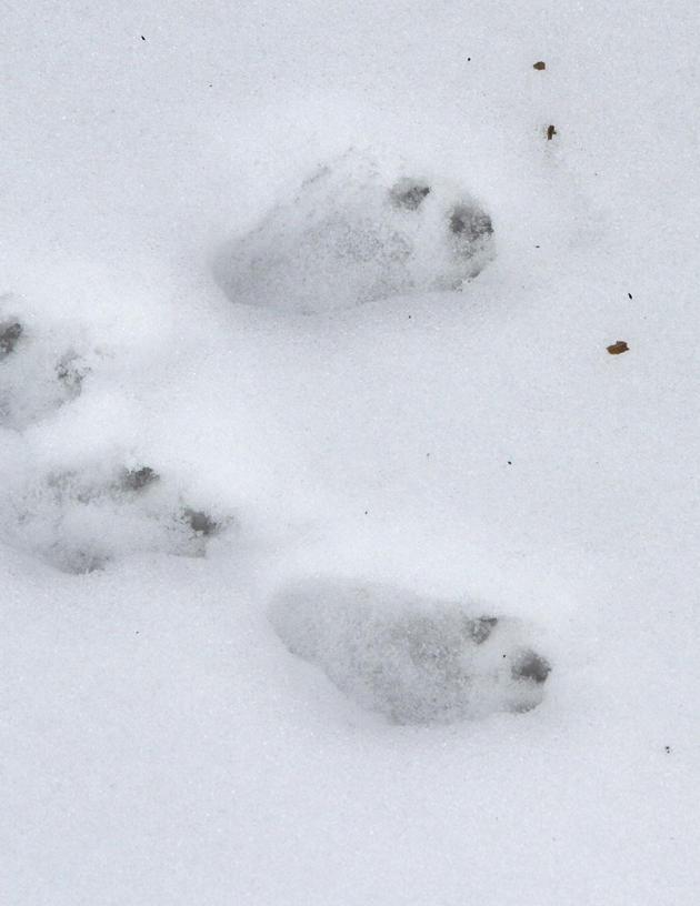 Copy of tracks in snow.jpg
