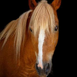 Lyle, aka Pony Boy
