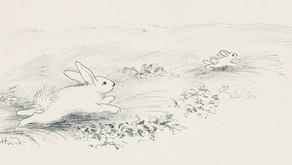 Dove scappi, coniglietto? Un classico americano del Novecento