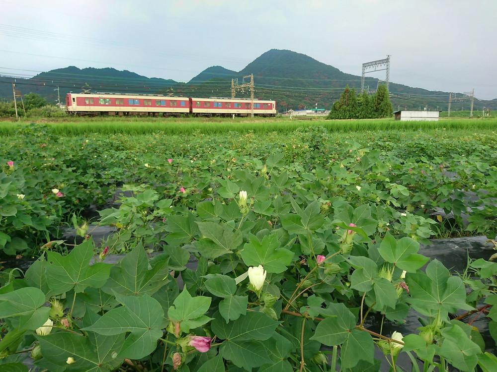 綿畑と近鉄電車