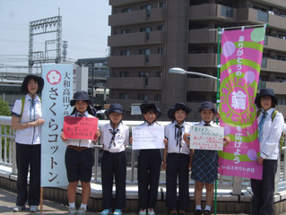 ガールスカウト奈良県第52団のみなさんが、さくらコットンPR活動を行いました