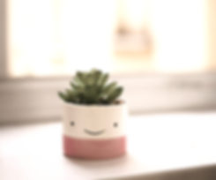 green succulent on white and pink pot_edited_edited.png