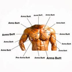 ArmsButt1