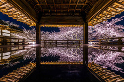 Deep inside of Sakura