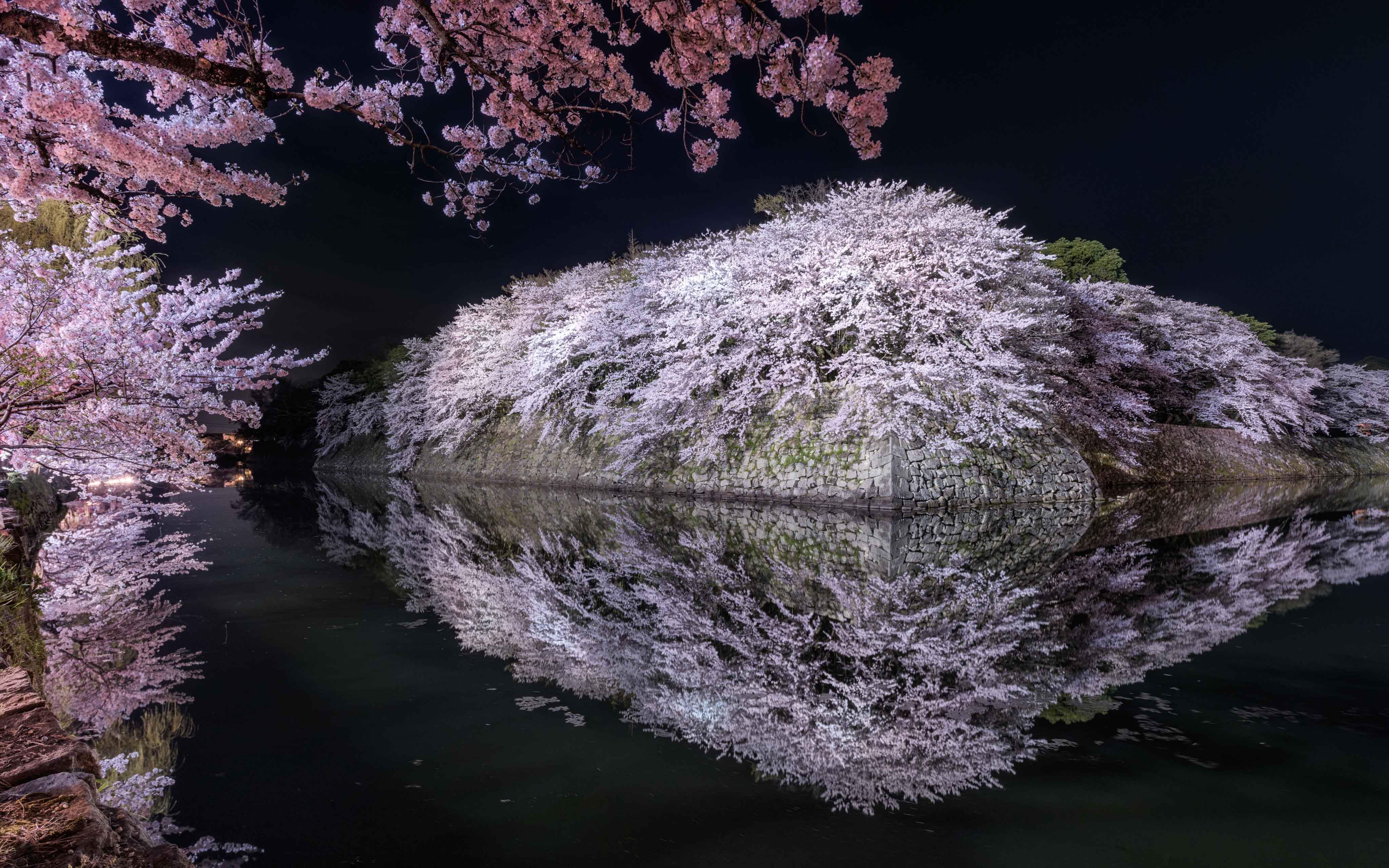 """""""Sakura Castle"""""""