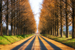 """""""Autumn Stripes"""""""