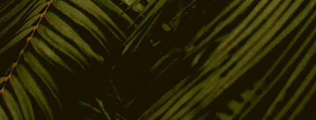 sfondo.mod.png