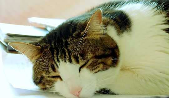 cat-2042089_1280_edited.jpg