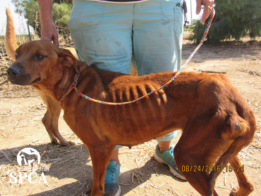 Woman charged with animal cruelty in case involving 145 animals