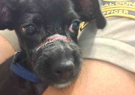 Animal Cruelty Prosecution Unit Launched by San Diego County DA's Office