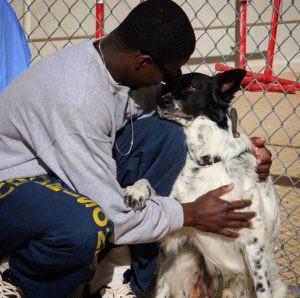 Santa Barbara County Sheriff and Santa Maria Valley Humane Society Partner With New Inmate Dog Train