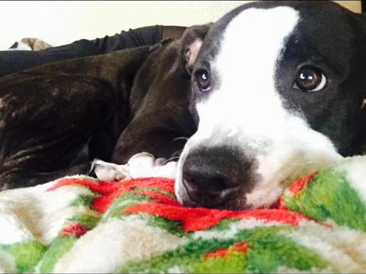 Riverside man who fatally slashed pit bull for killing his small dog sentenced