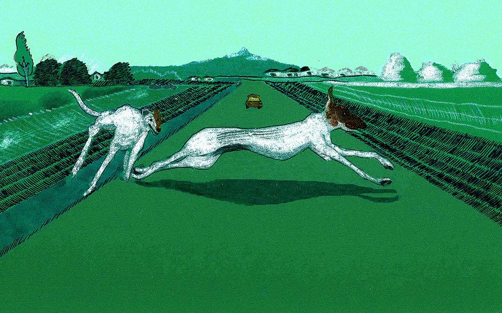 greyhounds lost.jpg