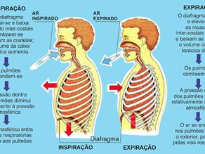 Respiração/ Trocas Gasosas