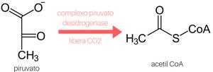 antes de entendermos a glicólise, é legal deixarmos algumas coisinhas claras (2)