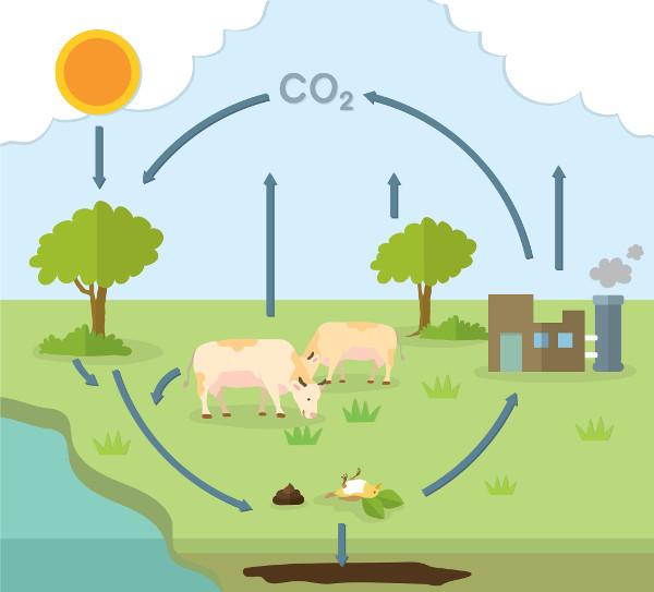 Ciclo do carbono: o que é, etapas, resumo - Biologia Net