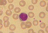 Resultado de imagem para linfócito