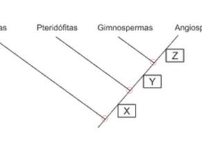 Como analisar um cladograma?
