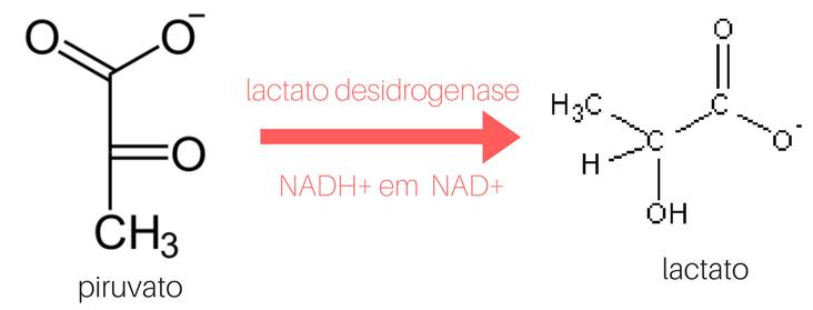 antes de entendermos a glicólise, é legal deixarmos algumas coisinhas claras (1)