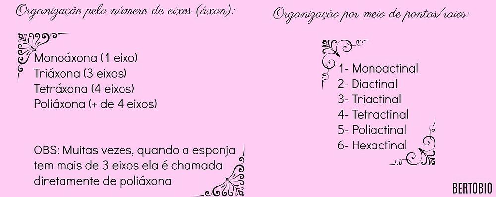 Organização Porífera.jpg