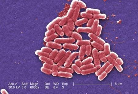 Resultado de imagem para inquilinismo bacterias intestino humano