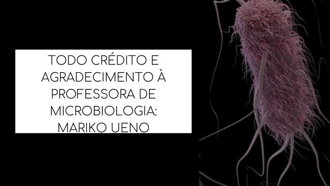 TODO CRÉDITO E AGRADECIMENTO À PROFESSORA DE MICROBIOLOGIA_MARIKO UENO.jpg