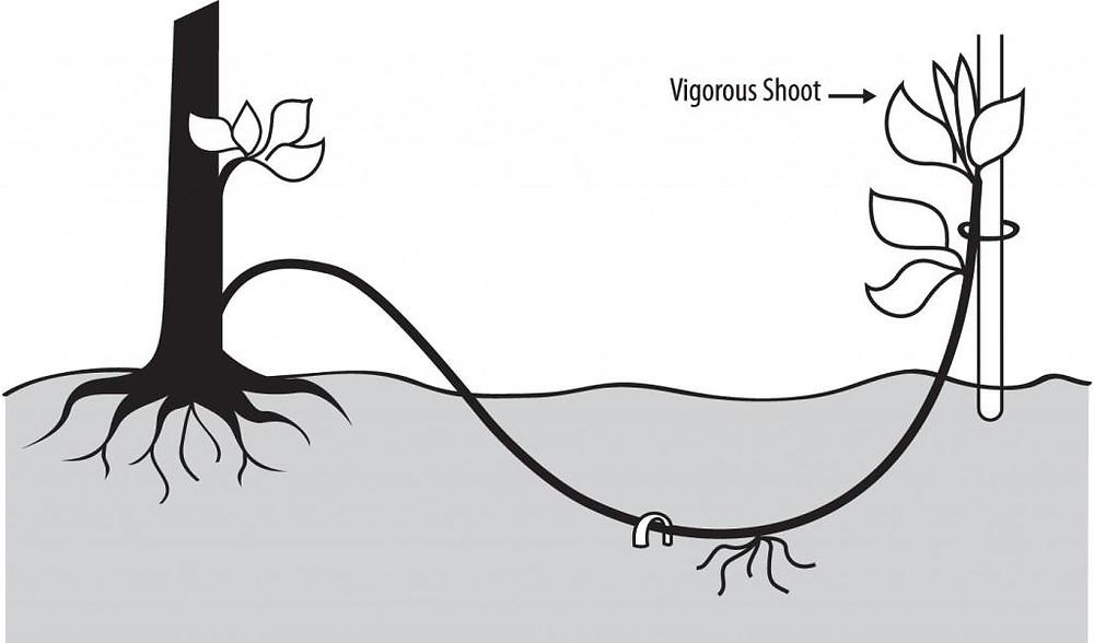 Resultado de imagem para mergulhia