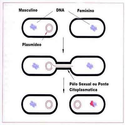 O que é reprodução - Tipos - Planeta Biologia