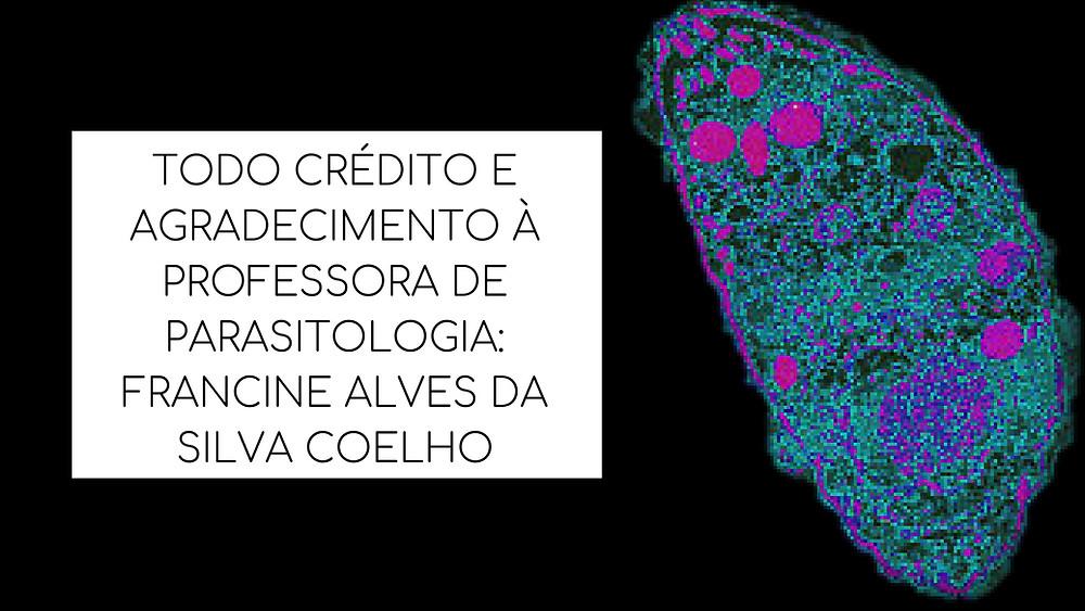 TODO CRÉDITO E AGRADECIMENTO À PROFESSORA DE PARASITOLOGIA_FRANCINE ALVES DA SILVA COELHO