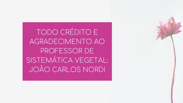 TODO CRÉDITO E AGRADECIMENTO AO PROFESSOR DE SISTEMÁTICA VEGETAL_JOÃO CARLOS NORDI