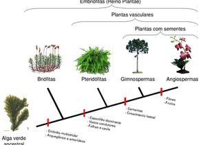 Grupos vegetais: detalhes gerais