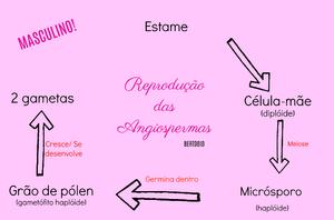 Reprodução das Angiospermas 1