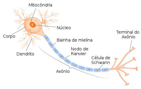 Resultado de imagem para neuronio
