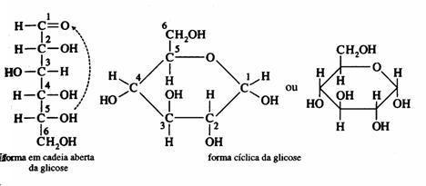 Resultado de imagem para estrutura ciclica monossacarideos