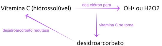 Vitamina C (hidrossolúvel)