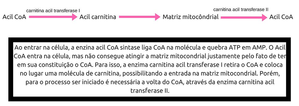Proteína quinase A (1)