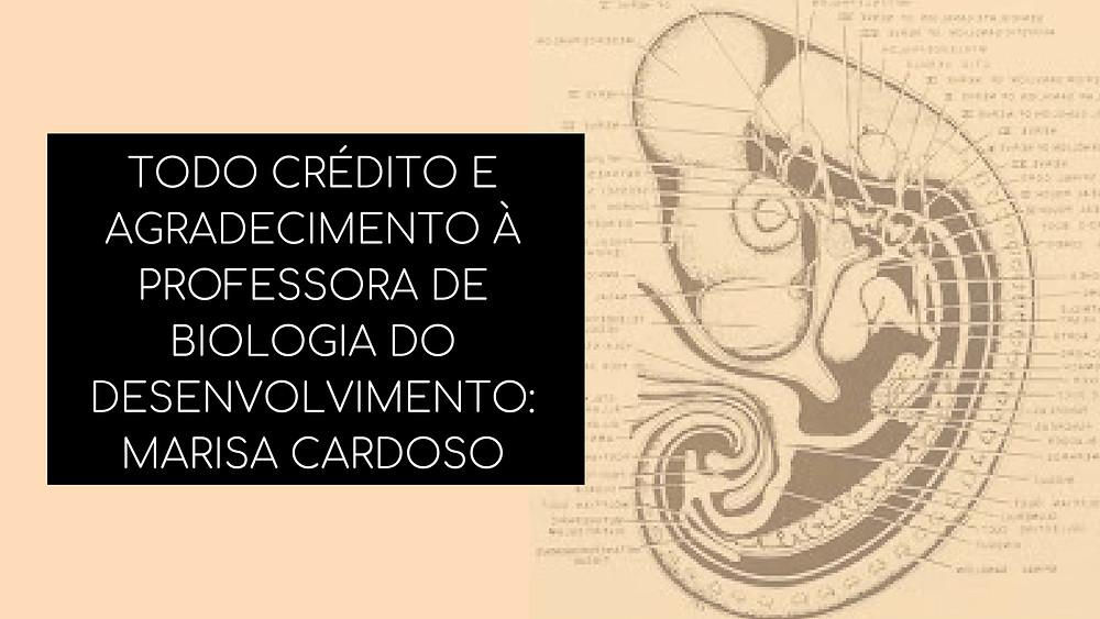 TODO CRÉDITO E AGRADECIMENTO À PROFESSORA DE BIOLOGIA DO DESENVOLVIMENTO_ MARISA CARDOSO.jpg