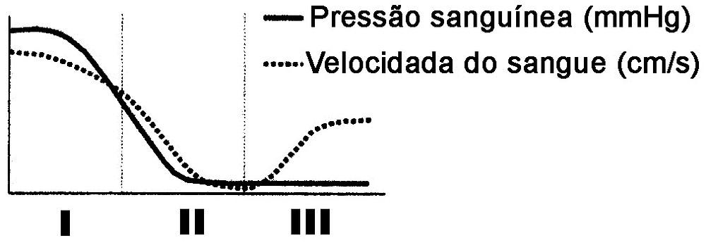 Resultado de imagem para gráfico capilares, veias e artérias