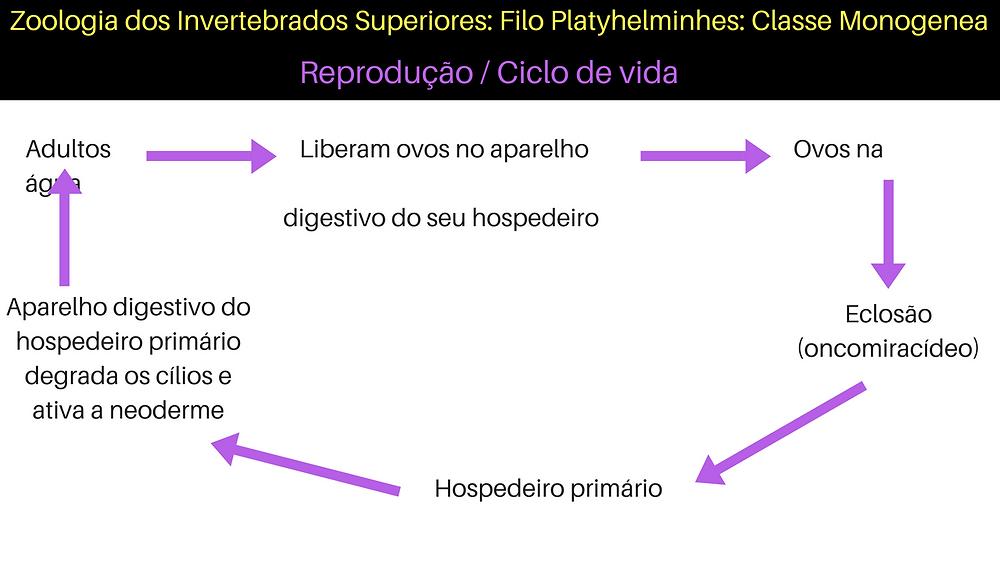 Zoologia dos Invertebrados Superiores_ Filo Platyhelminhes_ Classe Monogenea