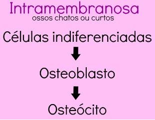 Ossificação intramembranosa