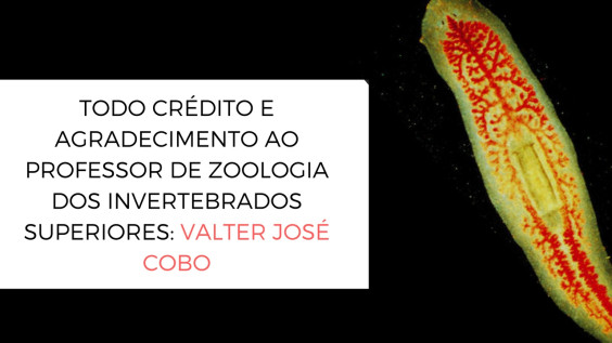 TODO CRÉDITO E AGRADECIMENTO AO PROFESSOR DE ZOOLOGIA DOS INVERTEBRADOS SUPERIORES_ VALTER JOSÉ COBO