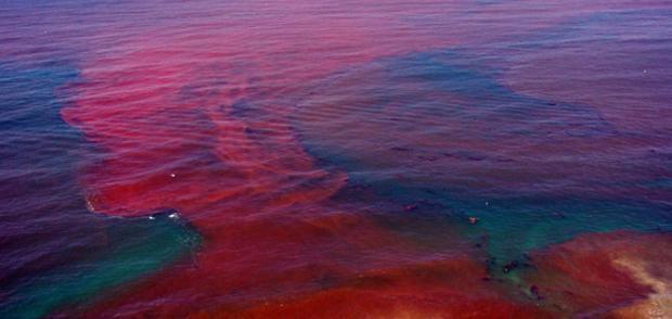 Resultado de imagem para maré vermelha